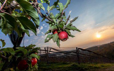 Die Steirische Apfelstraße: 6 Wanderlebnisse für Familien