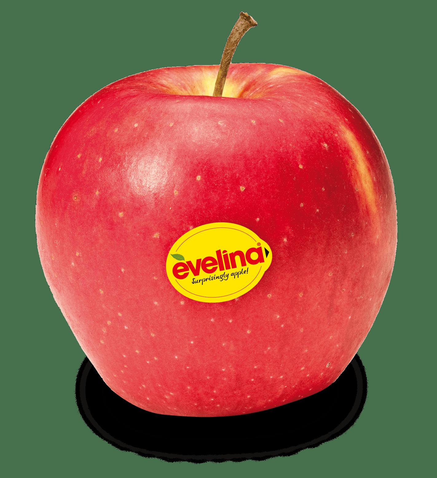 Apfelsorte Evelina